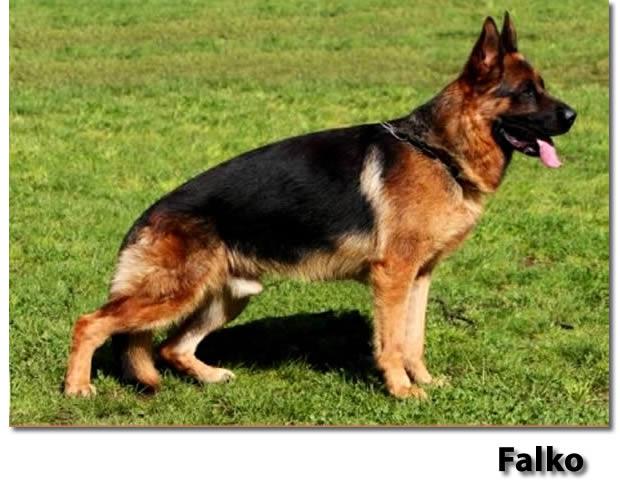 20130618-falko-a