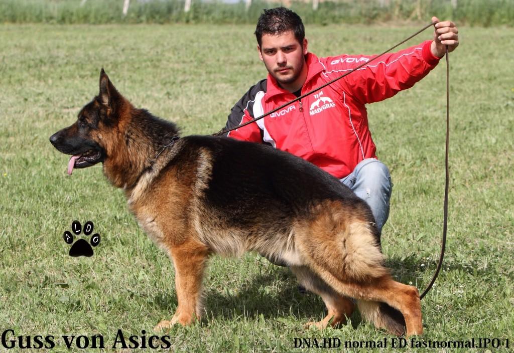 Guss von Asics eti dna